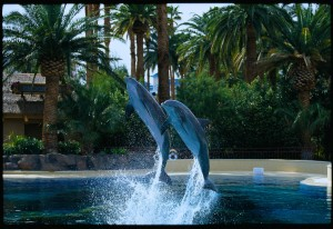 The Mirage-Dolphin Habitat
